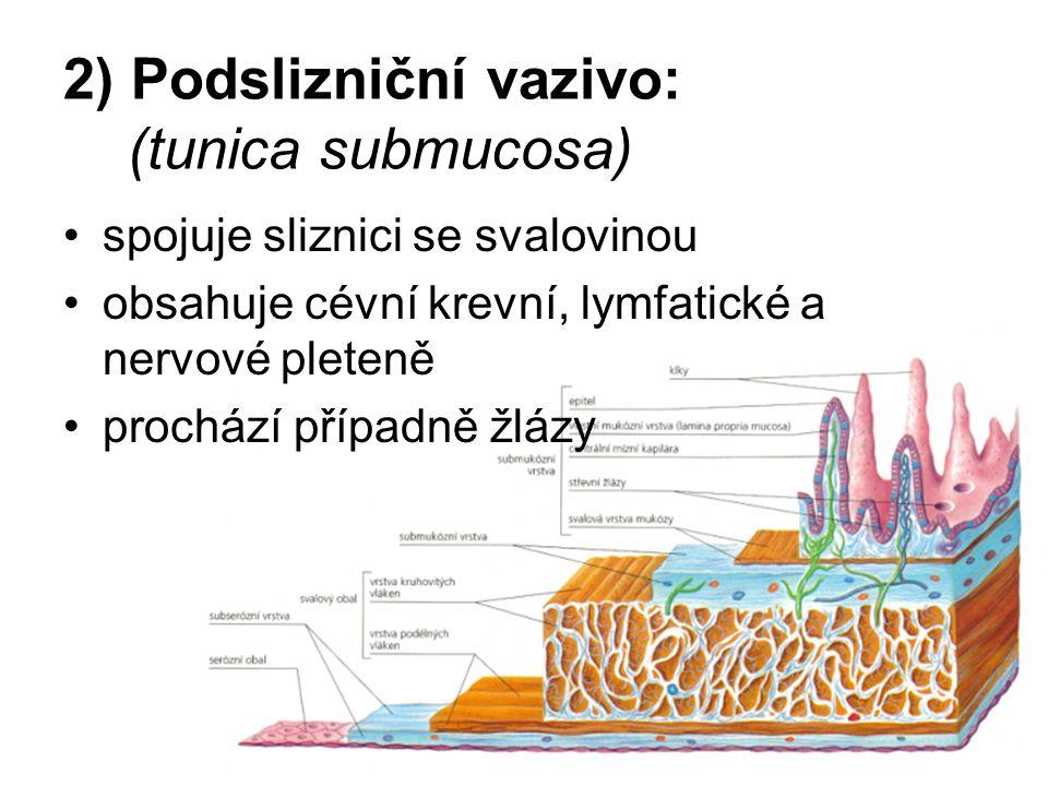 2) Podslizniční vazivo: (tunica submucosa)
