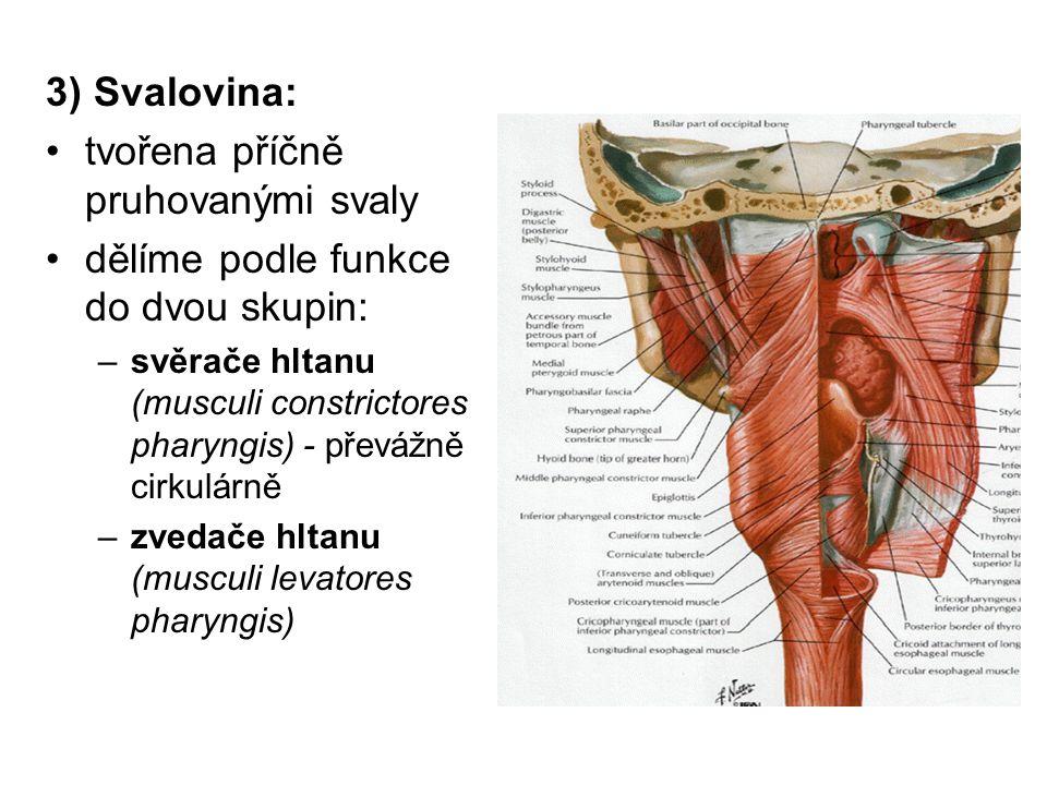 tvořena příčně pruhovanými svaly dělíme podle funkce do dvou skupin: