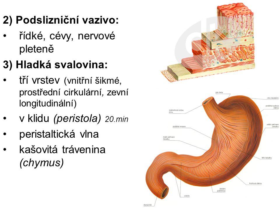 2) Podslizniční vazivo: