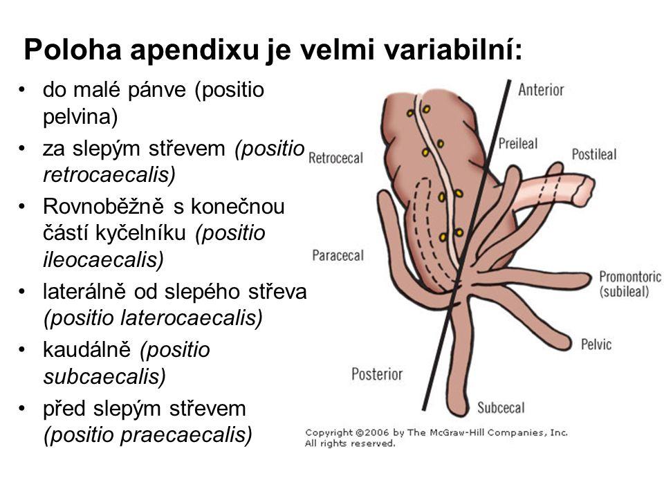 Poloha apendixu je velmi variabilní: