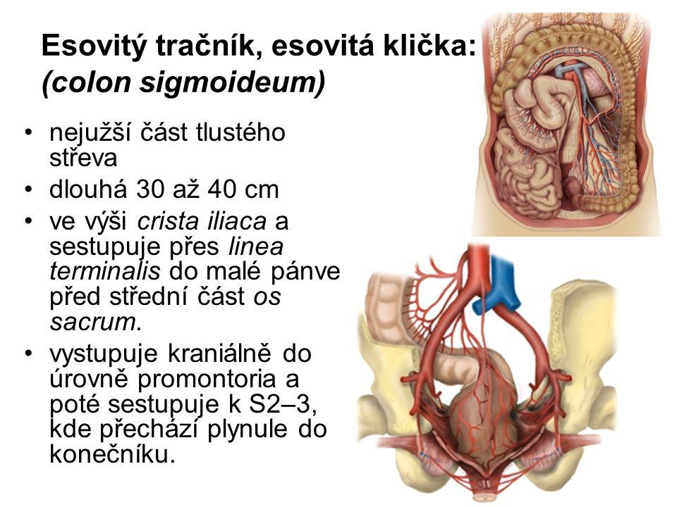 Esovitý tračník, esovitá klička: (colon sigmoideum)