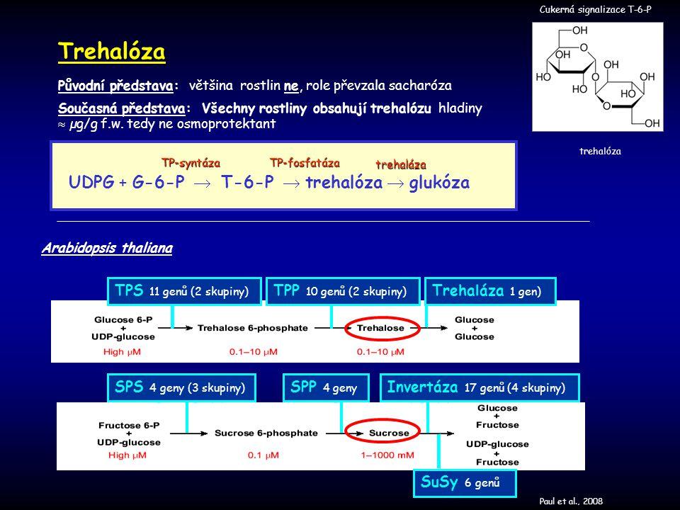 Trehalóza UDPG + G-6-P  T-6-P  trehalóza  glukóza