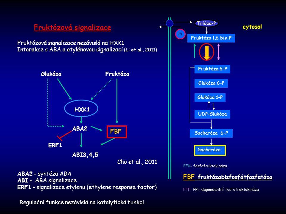 Fruktózová signalizace