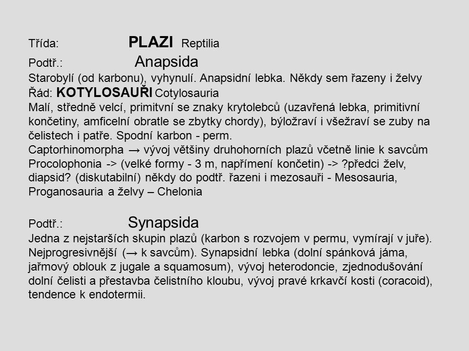 Třída: PLAZI Reptilia Podtř.: Anapsida.