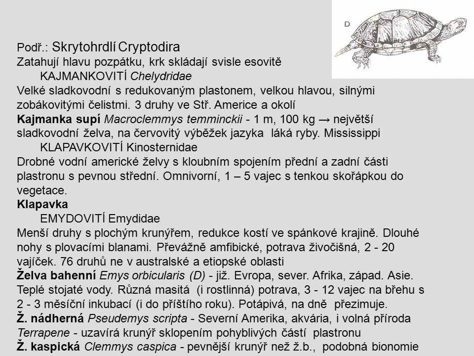 Podř.: Skrytohrdlí Cryptodira
