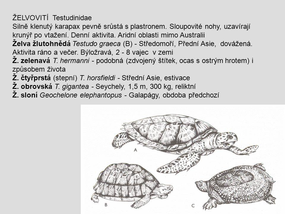 ŽELVOVITÍ Testudinidae