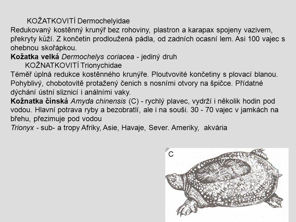 KOŽATKOVITÍ Dermochelyidae