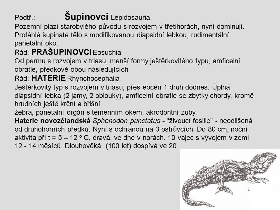 Podtř.: Šupinovci Lepidosauria