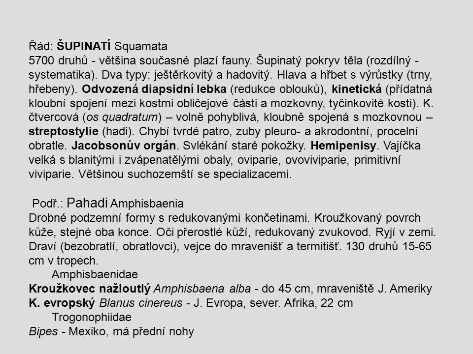Řád: ŠUPINATÍ Squamata