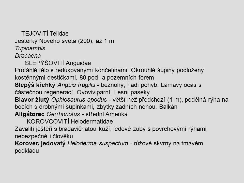 TEJOVITÍ Teiidae Ještěrky Nového světa (200), až 1 m. Tupinambis. Dracaena. SLEPÝŠOVITÍ Anguidae.