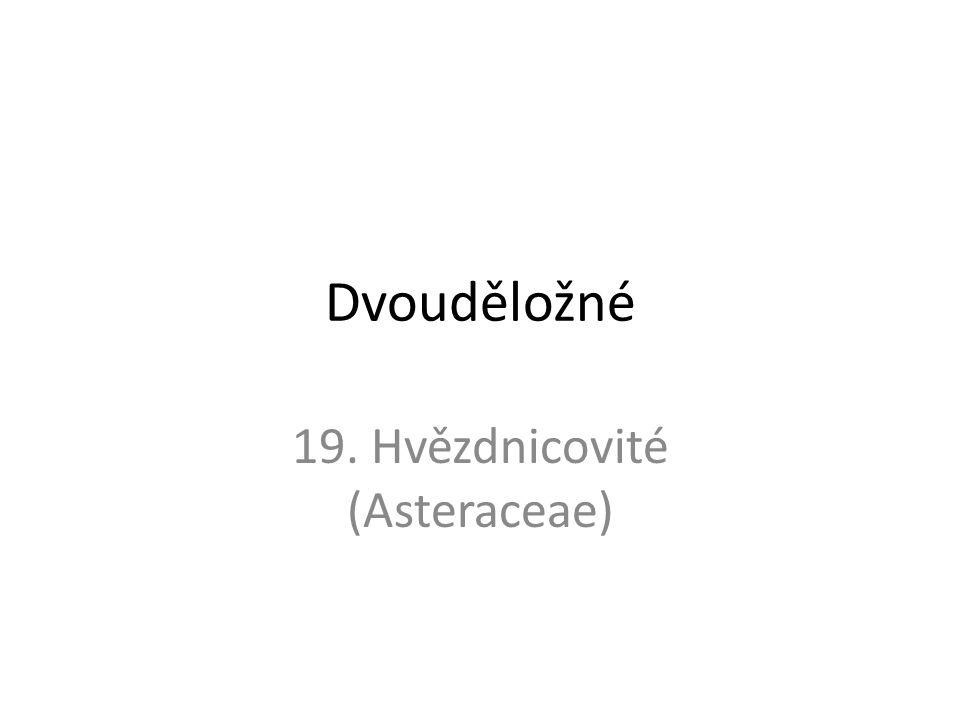19. Hvězdnicovité (Asteraceae)