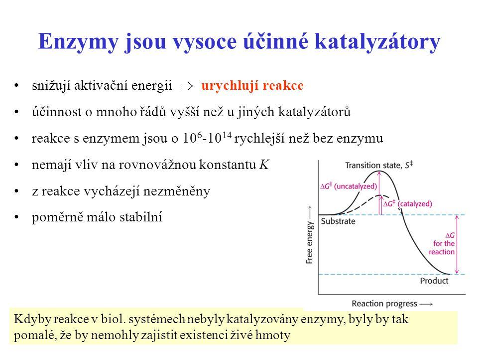 Enzymy jsou vysoce účinné katalyzátory