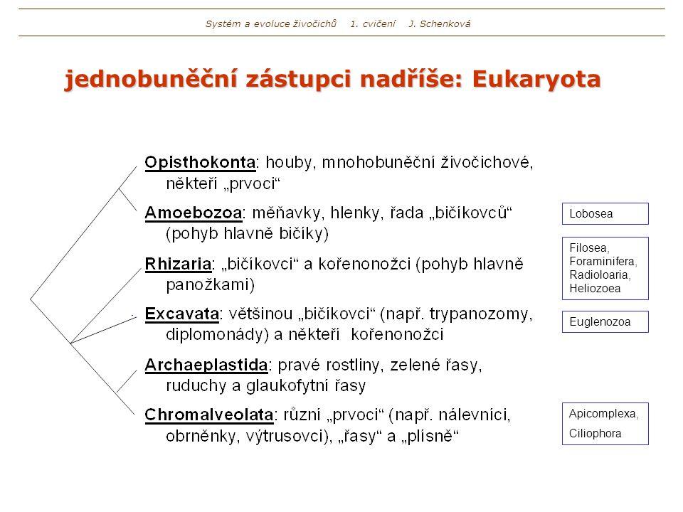 jednobuněční zástupci nadříše: Eukaryota