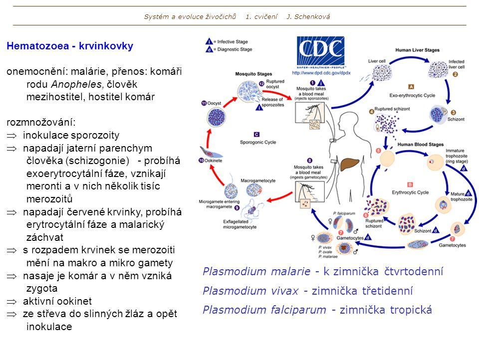 Systém a evoluce živočichů 1. cvičení J. Schenková