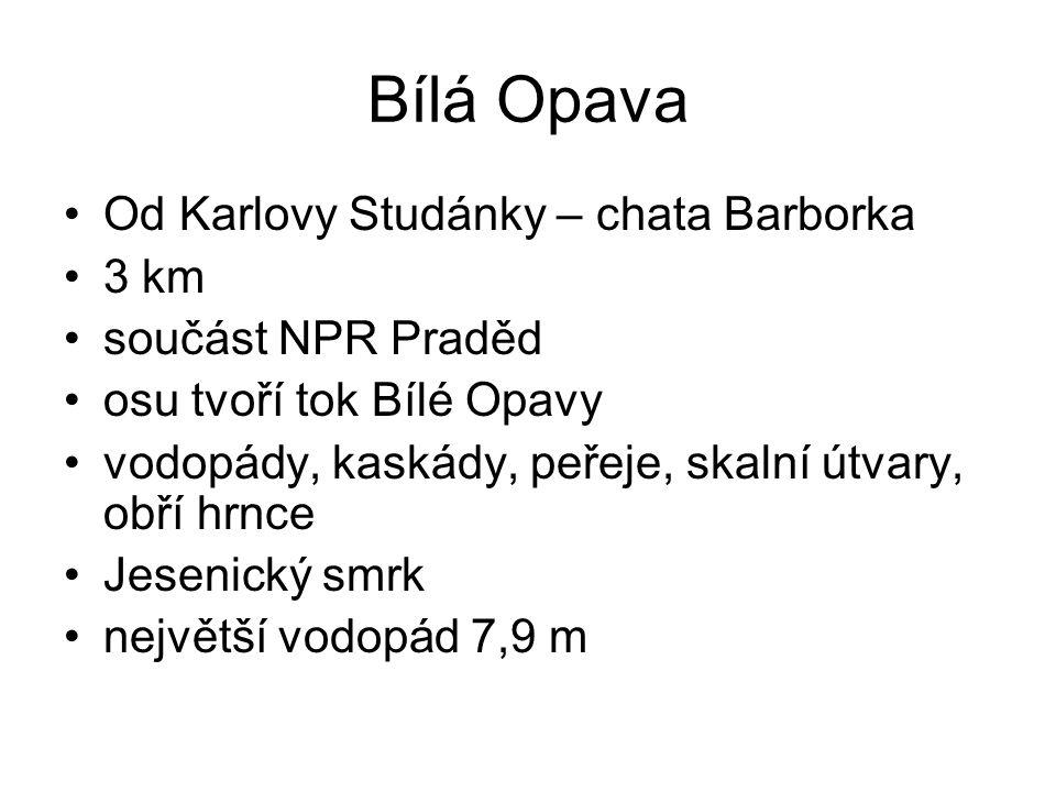 Bílá Opava Od Karlovy Studánky – chata Barborka 3 km