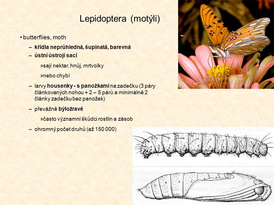 Lepidoptera (motýli) butterflies, moth