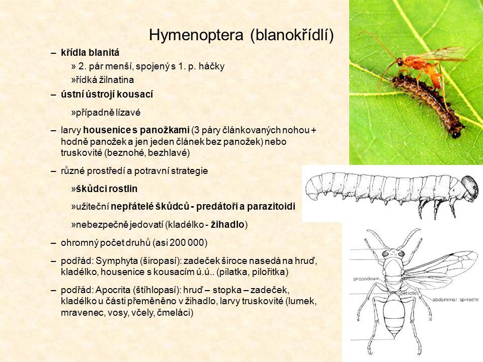 Hymenoptera (blanokřídlí)