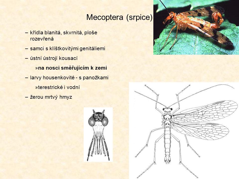 Mecoptera (srpice) křídla blanitá, skvrnitá, ploše rozevřená