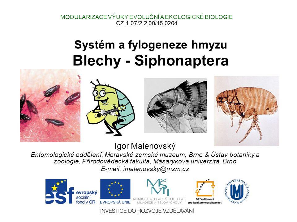 Systém a fylogeneze hmyzu Blechy - Siphonaptera