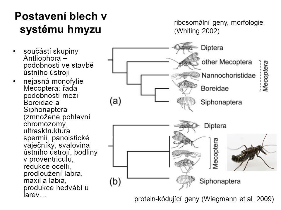 Postavení blech v systému hmyzu