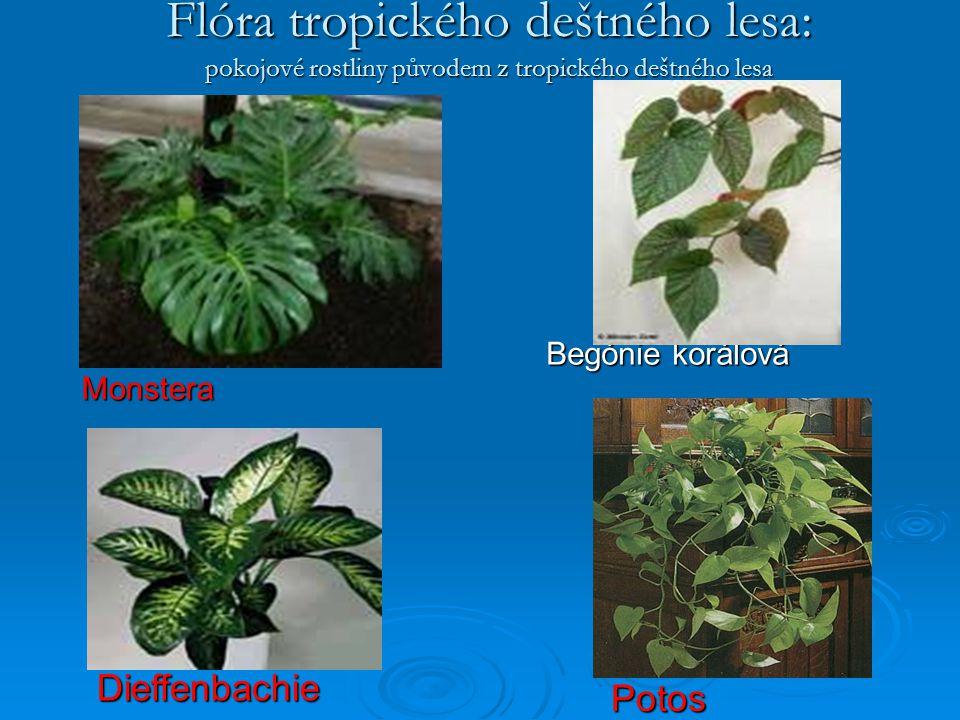 Flóra tropického deštného lesa: pokojové rostliny původem z tropického deštného lesa