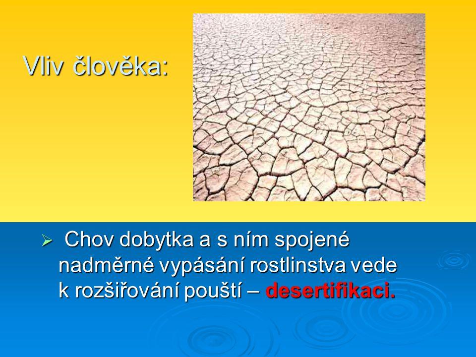 Vliv člověka: Chov dobytka a s ním spojené nadměrné vypásání rostlinstva vede k rozšiřování pouští – desertifikaci.