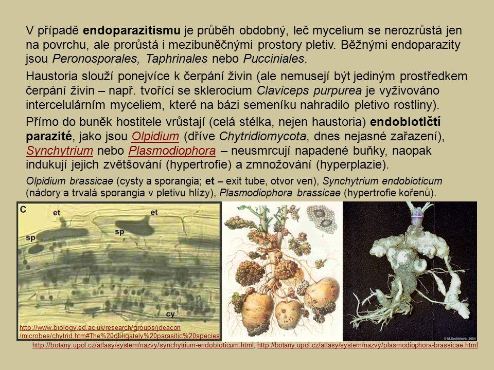 V případě endoparazitismu je průběh obdobný, leč mycelium se nerozrůstá jen na povrchu, ale prorůstá i mezibuněčnými prostory pletiv. Běžnými endoparazity jsou Peronosporales, Taphrinales nebo Pucciniales.