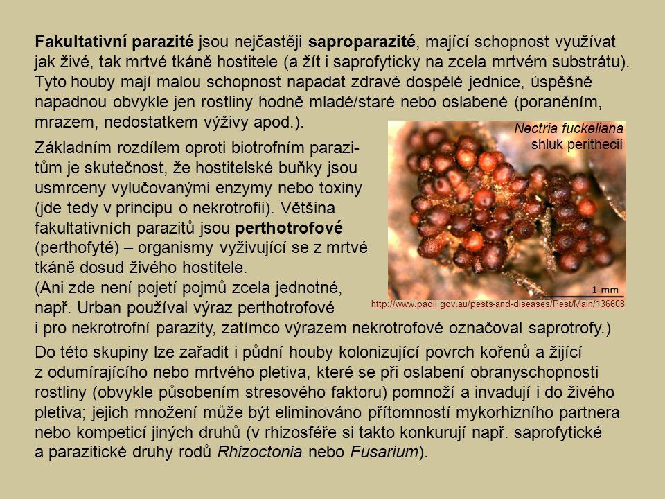 Fakultativní parazité jsou nejčastěji saproparazité, mající schopnost využívat jak živé, tak mrtvé tkáně hostitele (a žít i saprofyticky na zcela mrtvém substrátu). Tyto houby mají malou schopnost napadat zdravé dospělé jednice, úspěšně napadnou obvykle jen rostliny hodně mladé/staré nebo oslabené (poraněním, mrazem, nedostatkem výživy apod.).
