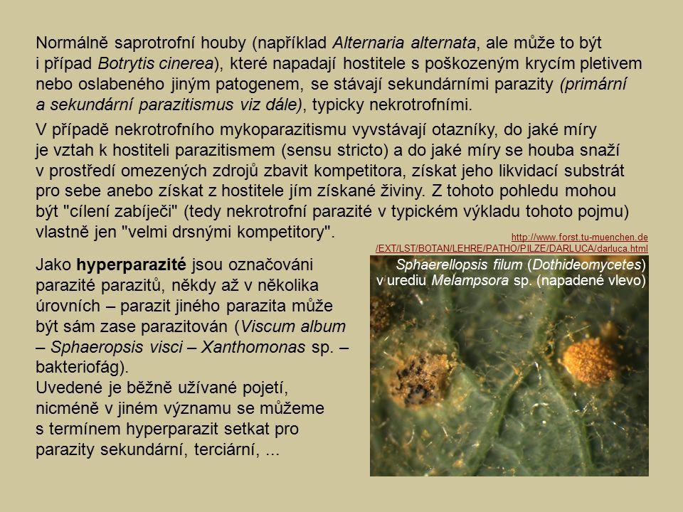 Normálně saprotrofní houby (například Alternaria alternata, ale může to být i případ Botrytis cinerea), které napadají hostitele s poškozeným krycím pletivem nebo oslabeného jiným patogenem, se stávají sekundárními parazity (primární a sekundární parazitismus viz dále), typicky nekrotrofními.