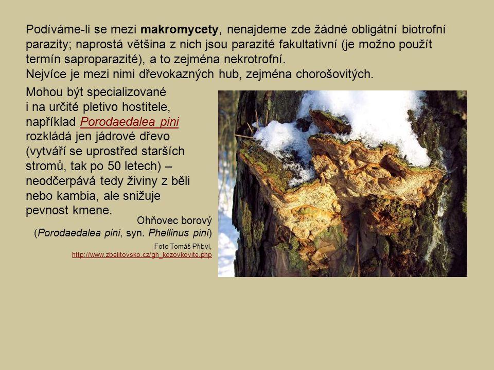 Nejvíce je mezi nimi dřevokazných hub, zejména chorošovitých.