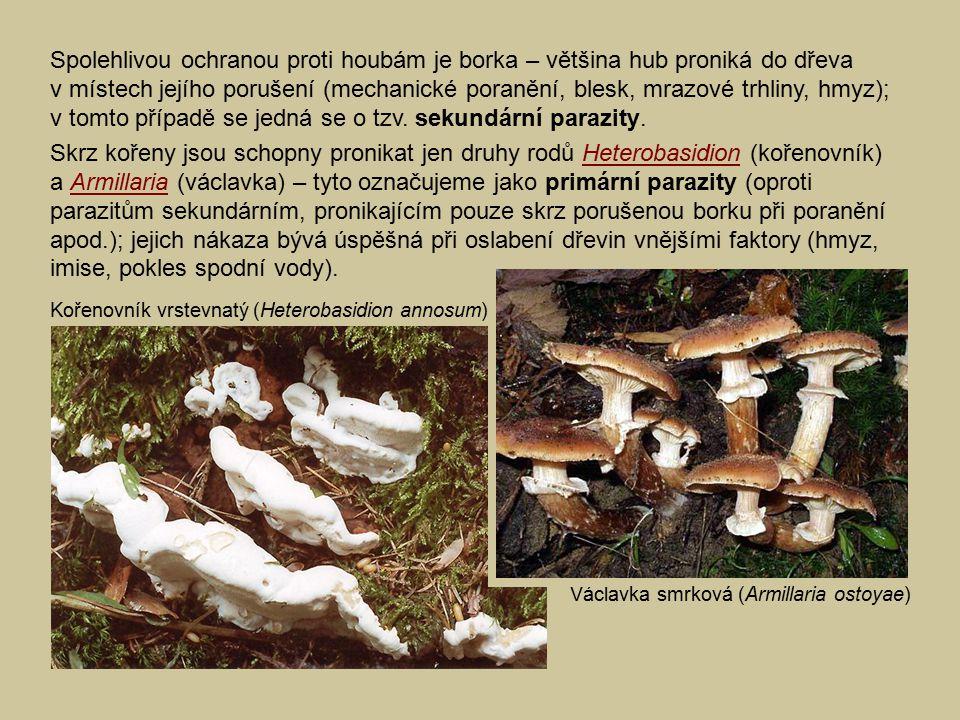 Spolehlivou ochranou proti houbám je borka – většina hub proniká do dřeva v místech jejího porušení (mechanické poranění, blesk, mrazové trhliny, hmyz); v tomto případě se jedná se o tzv. sekundární parazity.