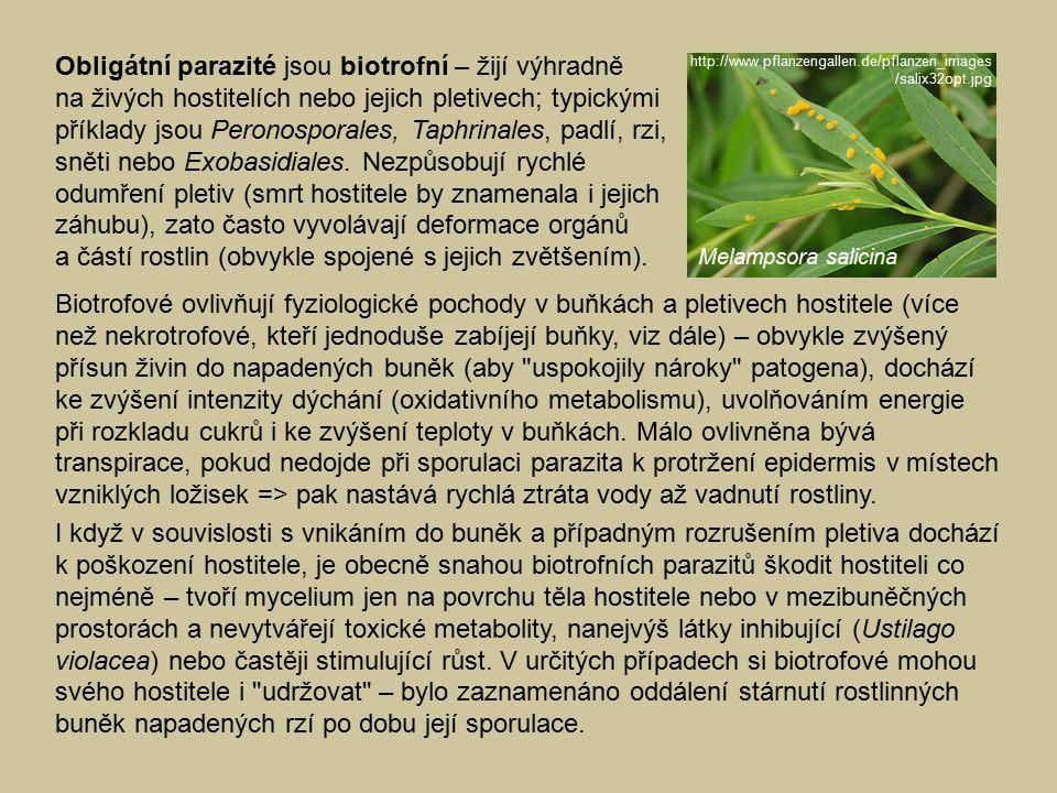 Obligátní parazité jsou biotrofní – žijí výhradně na živých hostitelích nebo jejich pletivech; typickými příklady jsou Peronosporales, Taphrinales, padlí, rzi, sněti nebo Exobasidiales. Nezpůsobují rychlé odumření pletiv (smrt hostitele by znamenala i jejich záhubu), zato často vyvolávají deformace orgánů a částí rostlin (obvykle spojené s jejich zvětšením).