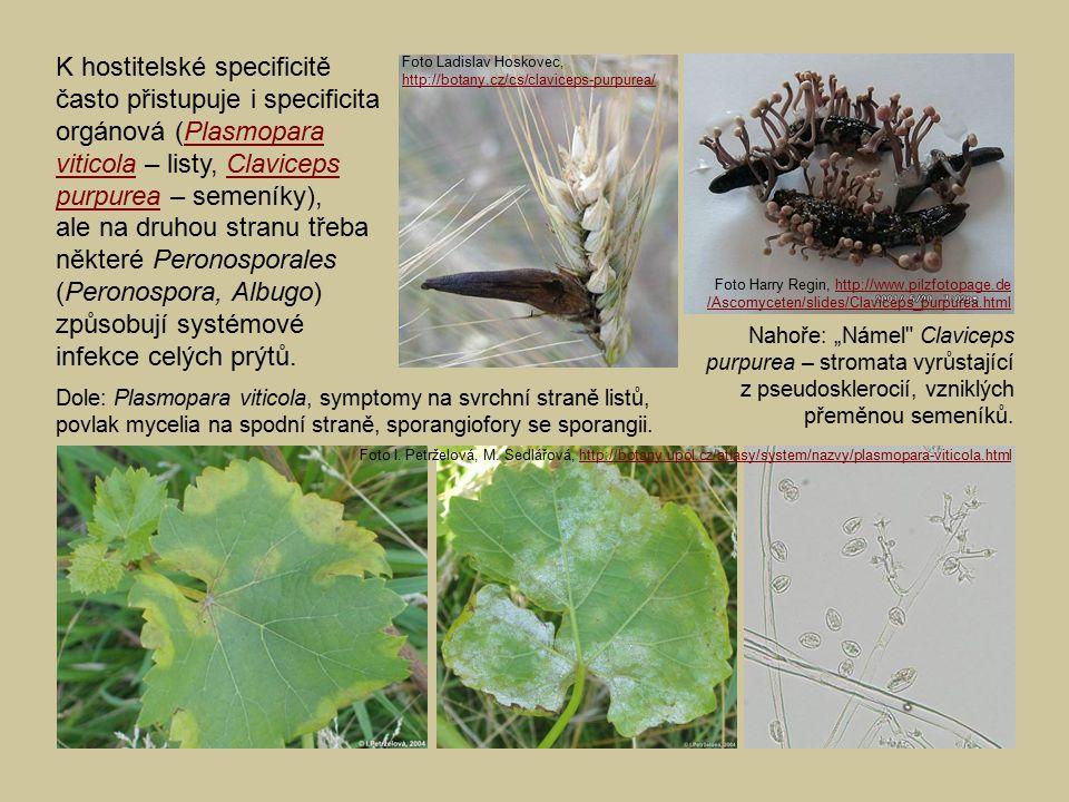 K hostitelské specificitě často přistupuje i specificita orgánová (Plasmopara viticola – listy, Claviceps purpurea – semeníky), ale na druhou stranu třeba některé Peronosporales (Peronospora, Albugo) způsobují systémové infekce celých prýtů.