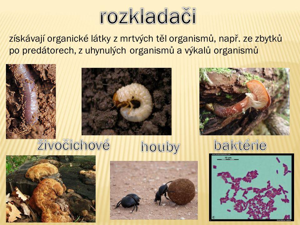 rozkladači živočichové houby baktérie