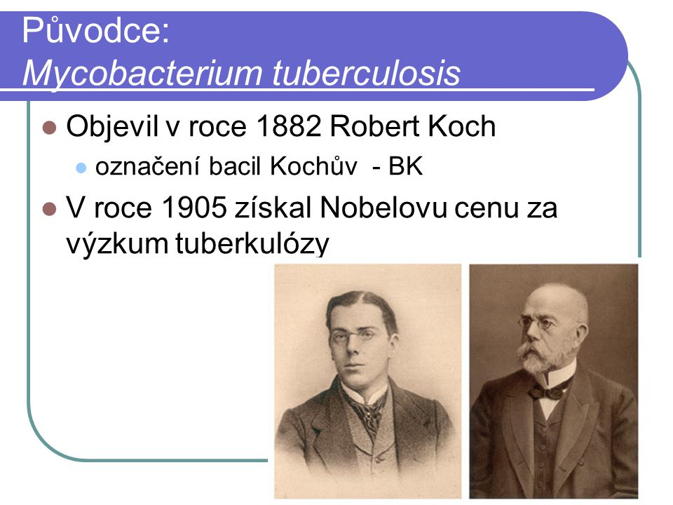 Původce: Mycobacterium tuberculosis