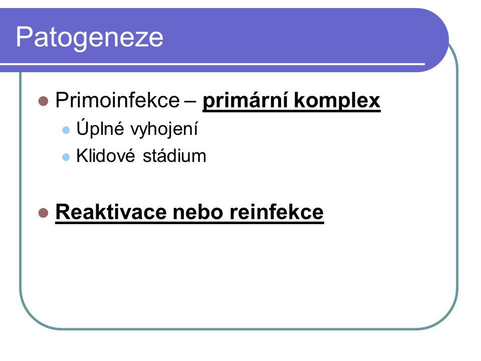 Patogeneze Primoinfekce – primární komplex Reaktivace nebo reinfekce