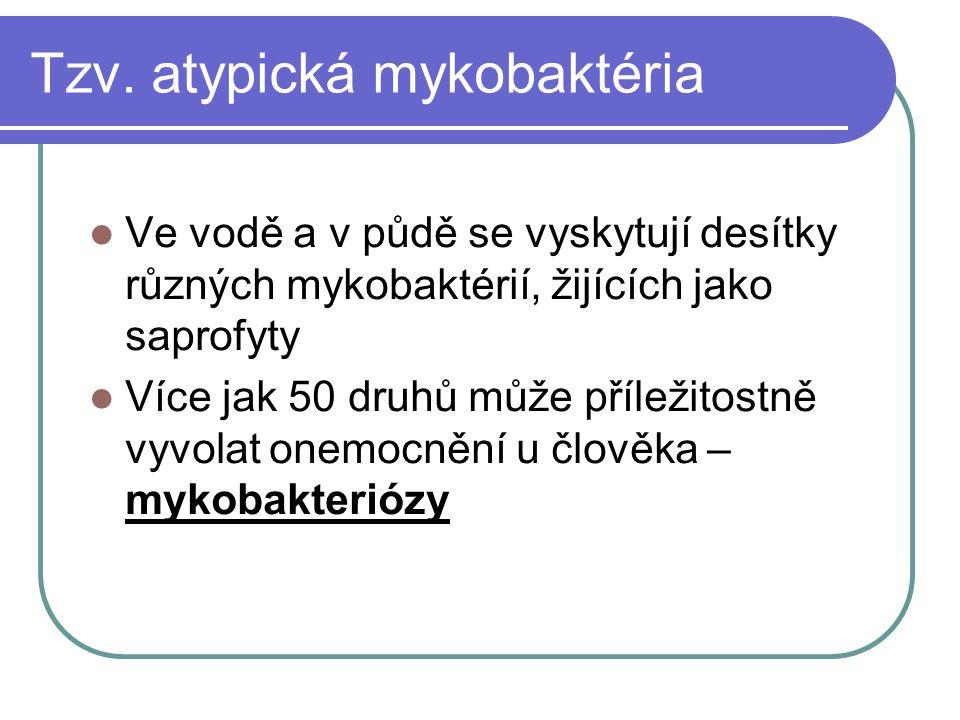 Tzv. atypická mykobaktéria