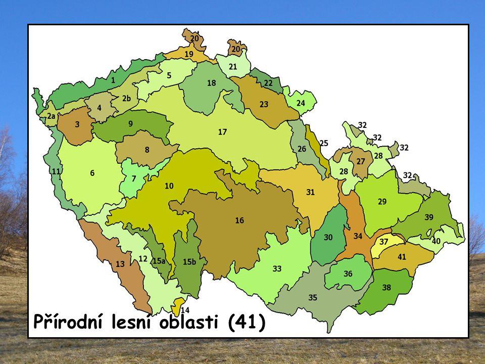 Přírodní lesní oblasti (41)