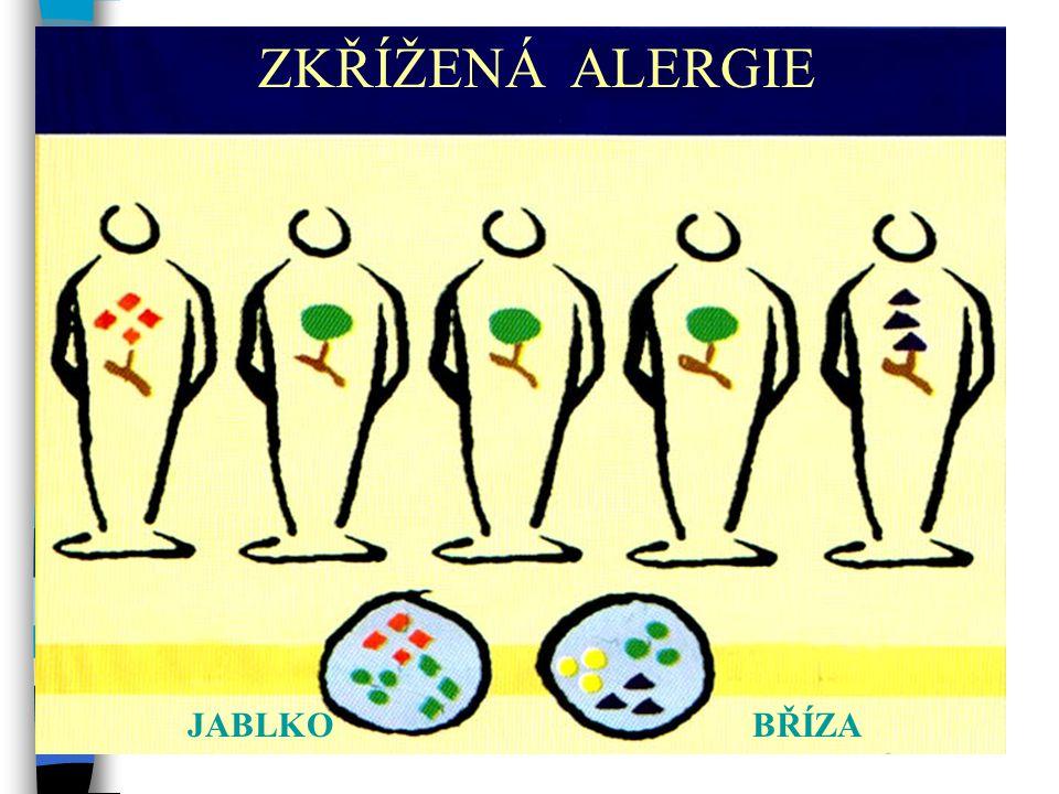 ZKŘÍŽENÁ ALERGIE Zkřížená alergie JABLKO BŘÍZA