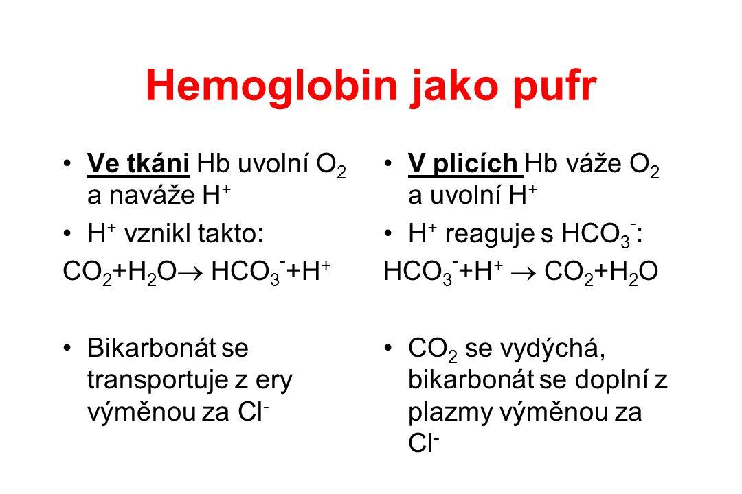 Hemoglobin jako pufr Ve tkáni Hb uvolní O2 a naváže H+