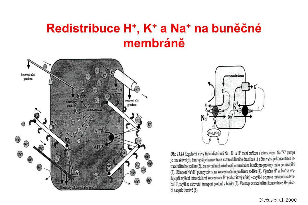 Redistribuce H+, K+ a Na+ na buněčné membráně