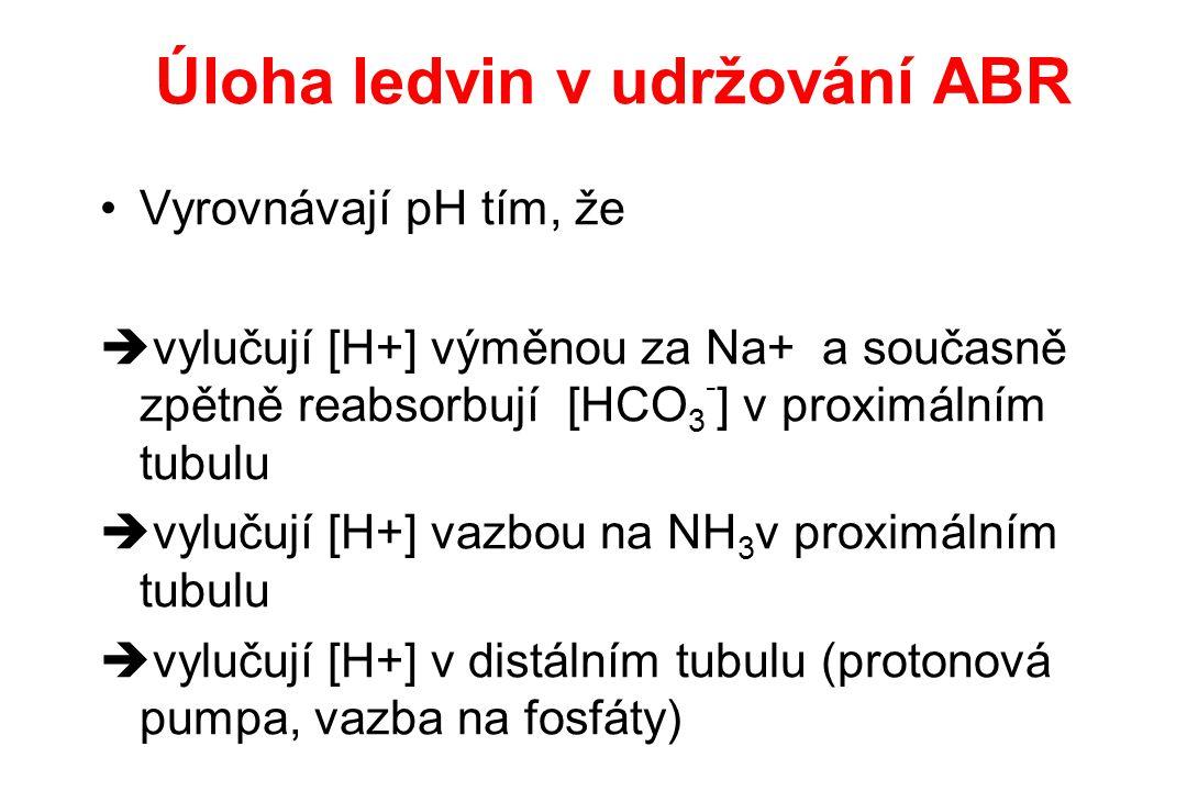 Úloha ledvin v udržování ABR