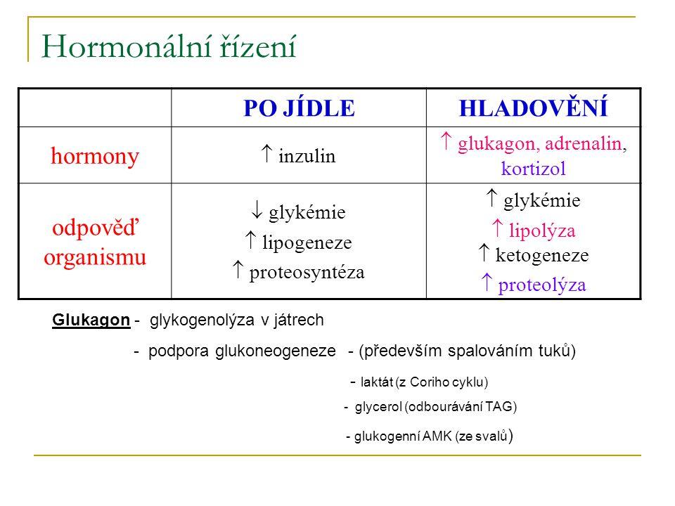 Hormonální řízení PO JÍDLE HLADOVĚNÍ hormony odpověď organismu