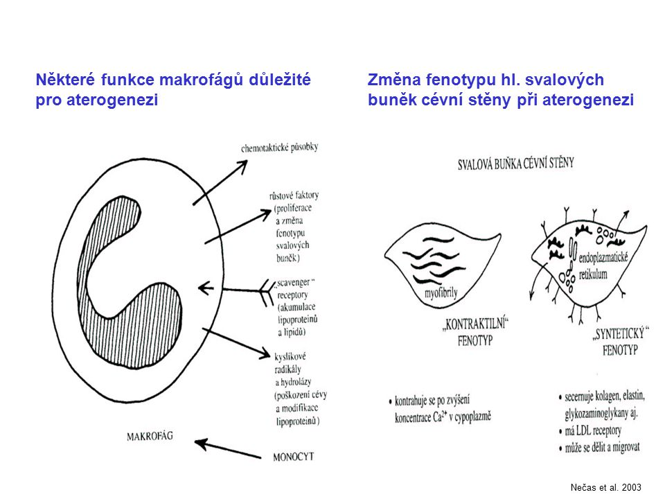 Některé funkce makrofágů důležité pro aterogenezi