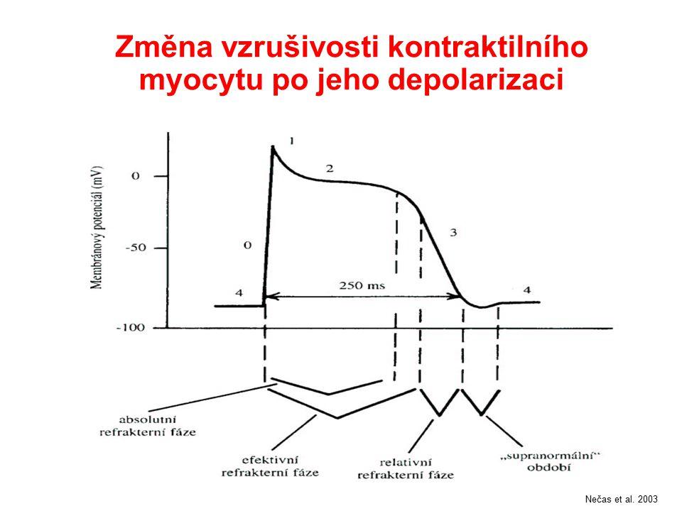 Změna vzrušivosti kontraktilního myocytu po jeho depolarizaci