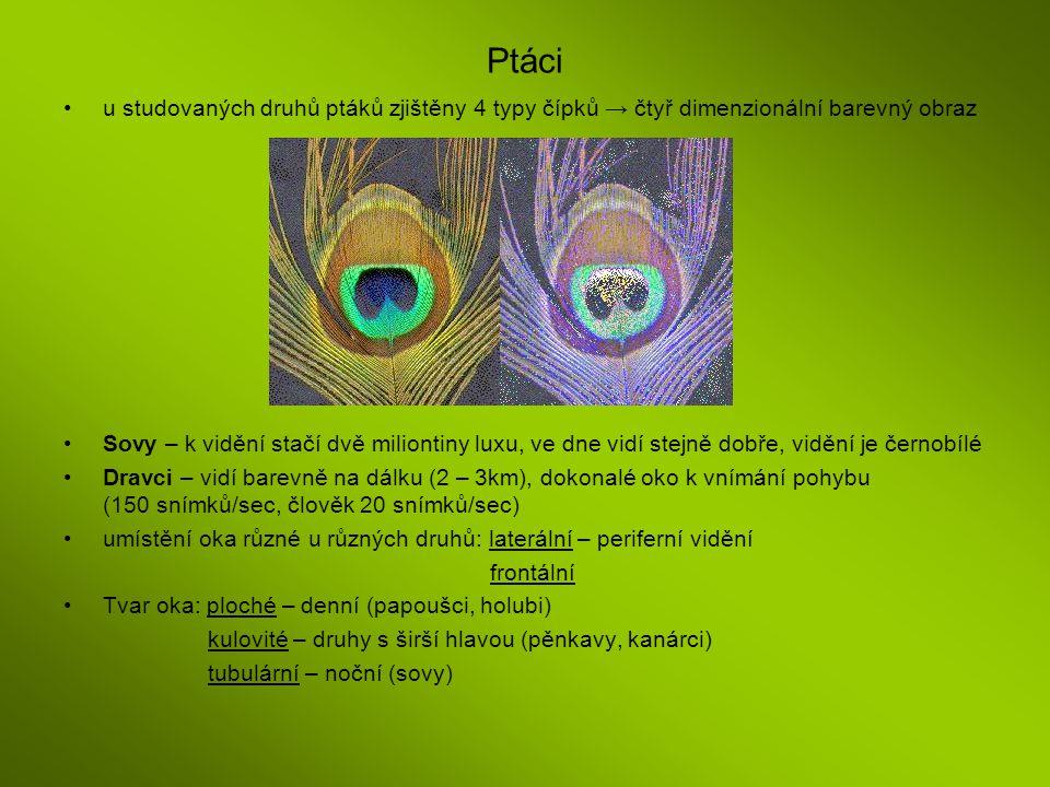 Ptáci u studovaných druhů ptáků zjištěny 4 typy čípků → čtyř dimenzionální barevný obraz.