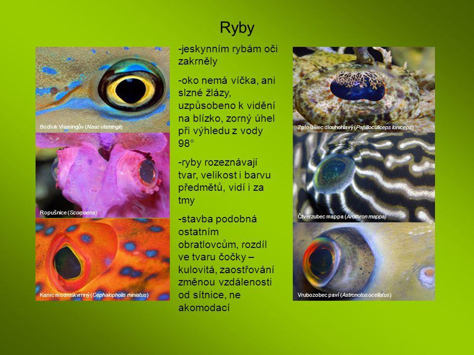 Ryby jeskynním rybám oči zakrněly