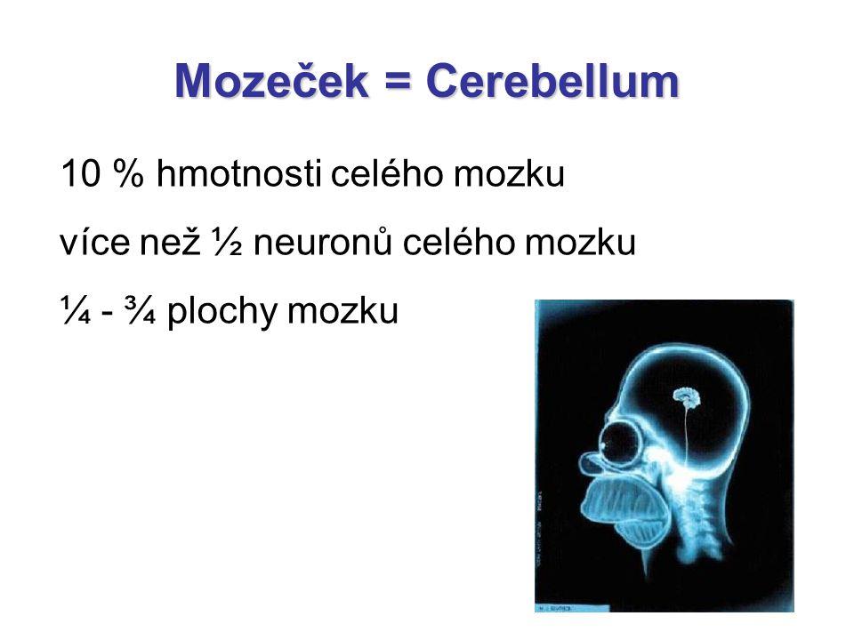 Mozeček = Cerebellum 10 % hmotnosti celého mozku