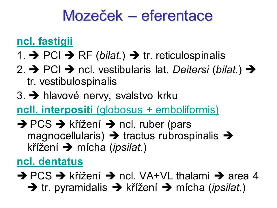 Mozeček – eferentace ncl. fastigii