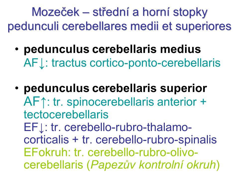 Mozeček – střední a horní stopky pedunculi cerebellares medii et superiores